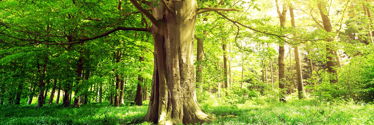 Maßgeschneiderte Baumbestattungen in Ohrdruf und Umgebung
